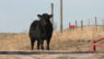 The Culture of Bullfighting & Bullriding
